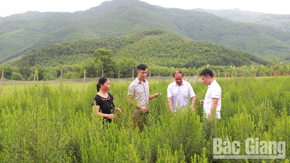 Developing agricultural products in Son Dong highland