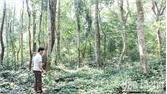 Pò Chùa - rừng thiêng xanh mãi