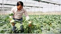 Thu hàng trăm triệu đồng từ trồng rau củ sạch