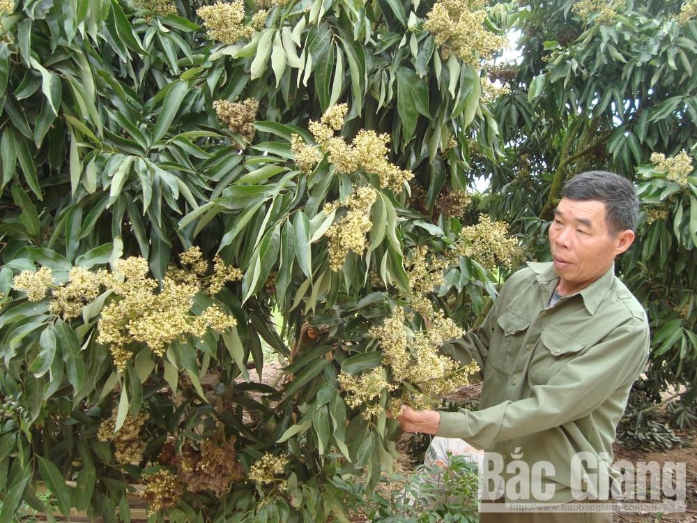 Dự án Trường bắn TB1; Lục Ngạn, Sơn Động, UBND tỉnh