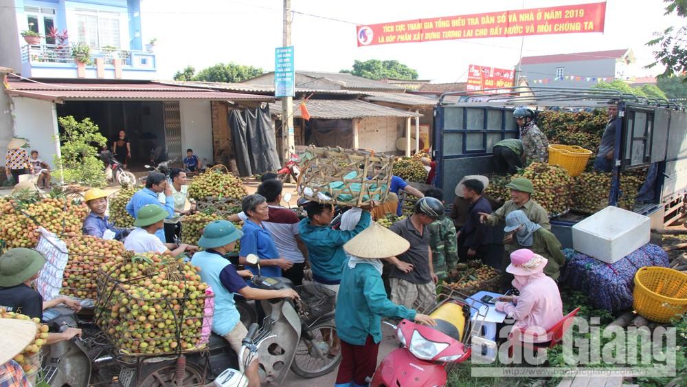 Tân Yên: Giá vải sớm Phúc Hòa dao động từ 25-35 nghìn đồng/kg