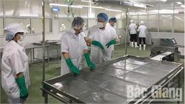 Công ty cổ phần xuất nhập khẩu Vifoco thu mua 700 tấn vải thiều để chế biến xuất khẩu