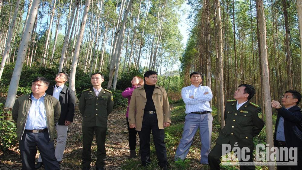 Tranh chấp đất rừng tại Công ty Lâm nghiệp Yên Thế (Bắc Giang): Bất chấp pháp luật
