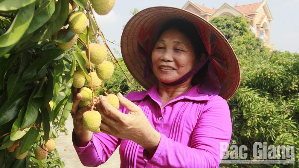 Vườn vải, làm giàu, người phụ nữ Sán Dìu, bà Trương Thị Kém