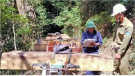 Bài 1: Nóng bỏng nạn phá rừng, khai thác lâm sản trái phép