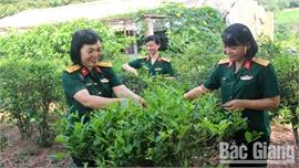 Vườn chè của các nữ quân nhân