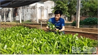 Sản xuất giá thể bầu hữu cơ trong nhân giống keo, bạch đàn: Hướng đi mới thúc đẩy  kinh tế lâm nghiệp Bắc Giang