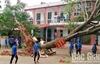 Cây xanh gãy đổ, lo ngại về an toàn trường học