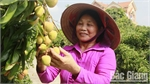 Room for Bac Giang lychee export to Singapore