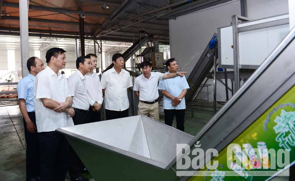 Provincial Party Secretary, Bui Van Hai, lychee quality, well prepare for consumption, Bac Giang province, lychee production and consumption, Japanese market