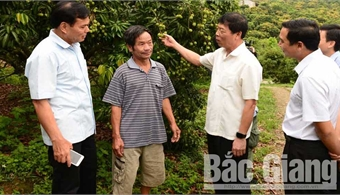 Provincial Party Secretary Bui Van Hai orders to ensure lychee quality and well prepare for consumption