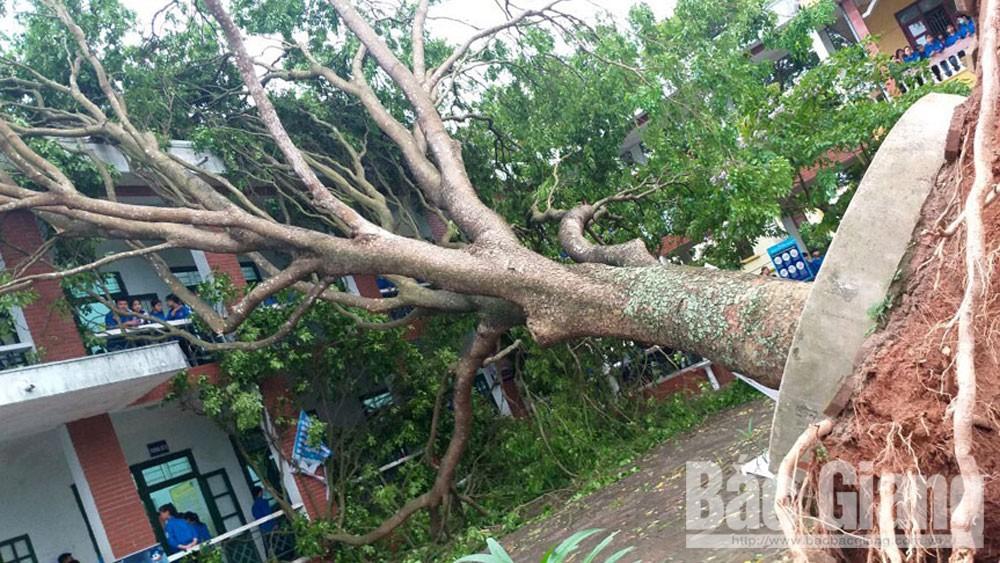 cây đổ, trường học an toàn, bắc giang, giáo dục