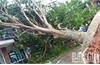 Sở Giáo dục và Đào tạo Bắc Giang chỉ đạo kiểm tra hệ thống điện và cây xanh trong trường học