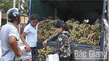 Hơn 300 thương nhân Trung Quốc đã được cấp visa nhập cảnh vào thu mua vải thiều Bắc Giang