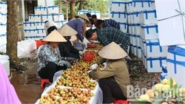 Ngày 3/6, chuyên gia Nhật Bản sẽ sang Việt Nam kiểm tra các lô vải xuất khẩu
