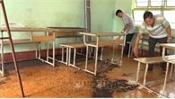 """Bọ đậu đen """"tấn công"""" trường học ở Bình Phước"""