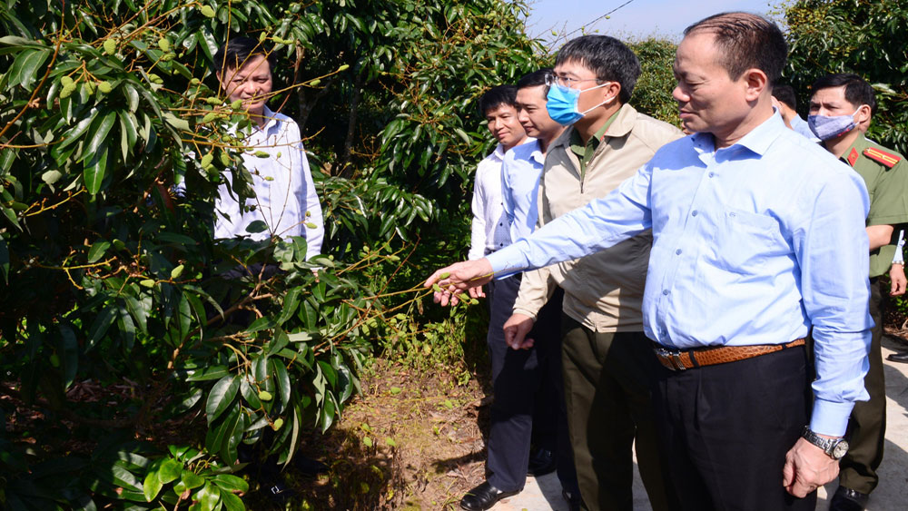 Bac Giang actively promotes trade, expands markets for lychee