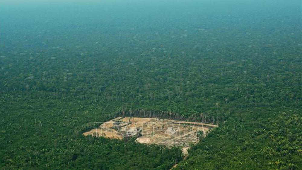 Brazil, phá rừng Amazon, truy tố, phá rừng