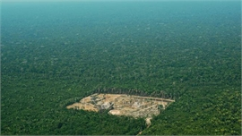 Brazil truy tố trên 2.200 đối tượng phá rừng Amazon