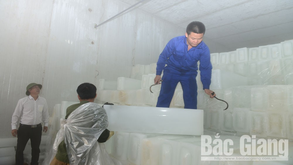 Luc Ngan sufficiently produces supporting commodities and services for lychee season