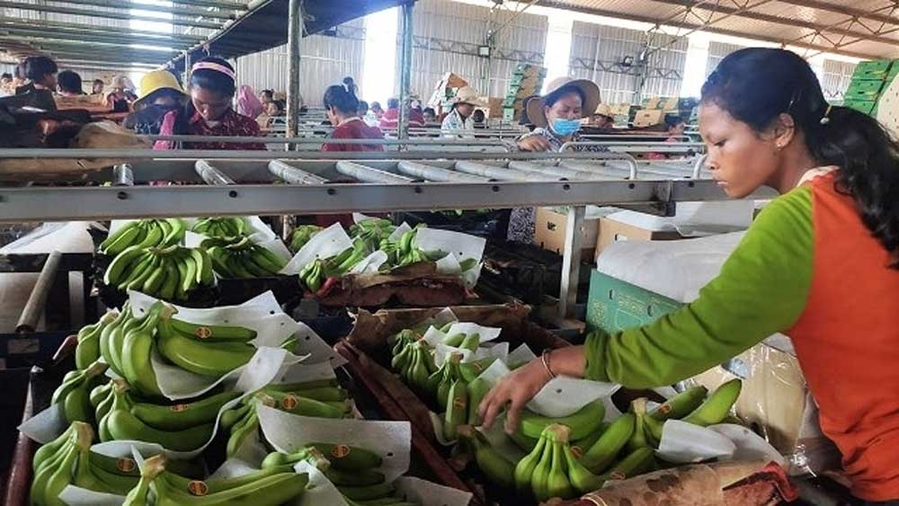 Vietnamese enterprise, Cambodia, stable jobs, Vietnamese Truong Hai Auto Corporation, livestock, forestry products, agricultural supplies