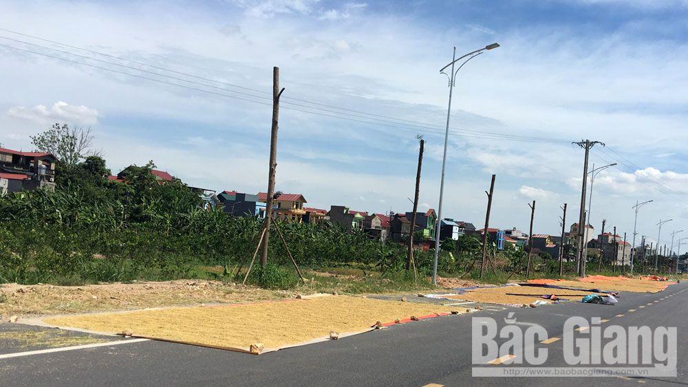 Việt Yên: Vẫn còn tình trạng phơi thóc trên đường