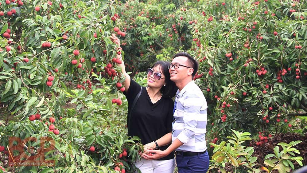 Bac Giang province, sweet fruit season, Tourism Programme, tourism stimulation, Vietnamese people travel Vietnam, local tourism destinations, socio-economic development