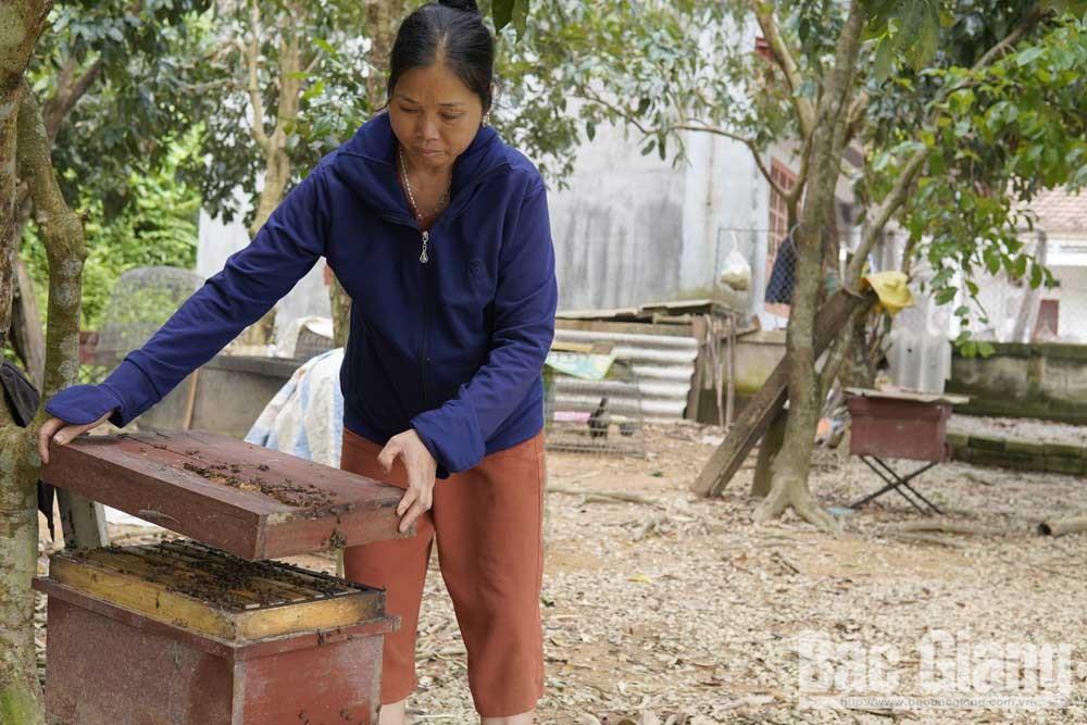 Mô hình nuôi ong của gia đình bà Lượng ở bản Chay.