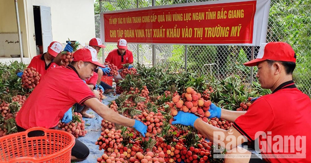 Lychee consumed to export to US market