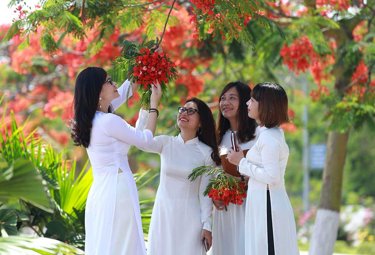 Summer flowers, red flamboyant flowers, colourful picture, Hai Phong city, popular destination, symbolic flower of students
