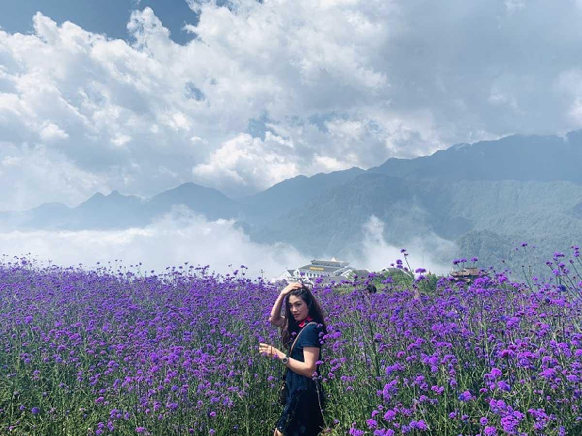 Đồi hoa tím, hot nhất Sa Pa, check-in chụp ảnh, cánh đồng hoa mã tiền thảo,  đẹp như một bức tranh