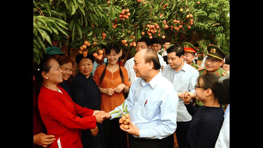 Niềm vui của người trồng vải khi Thủ tướng về thăm