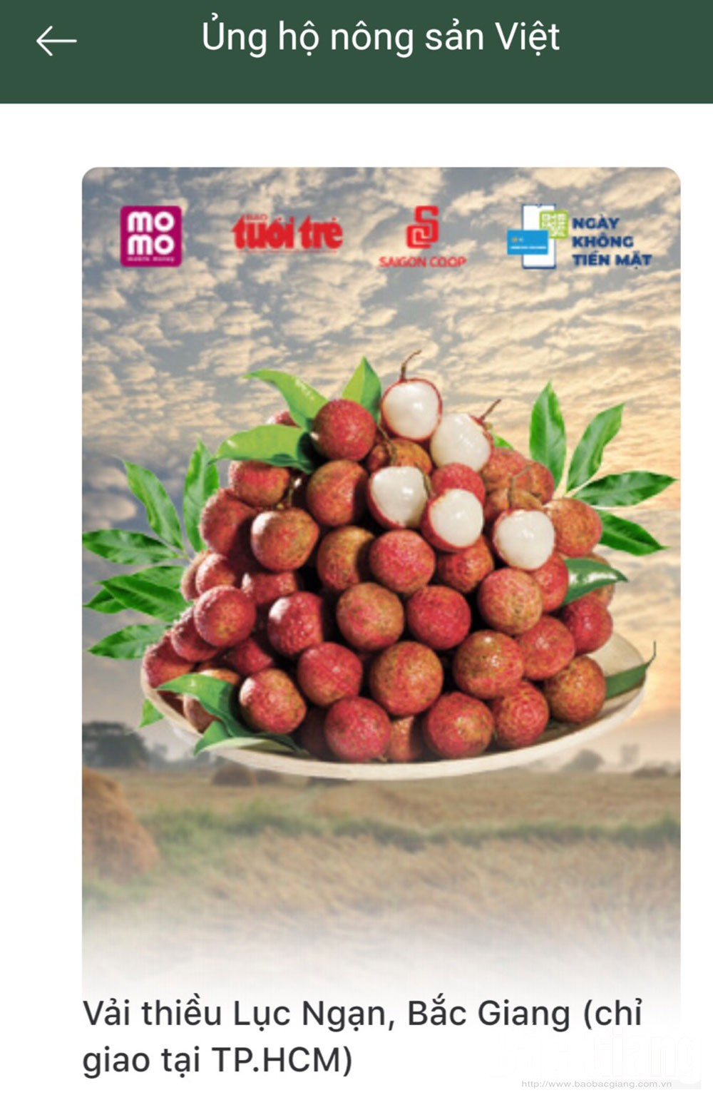 37 tonnes of lychee, MoMo pocket, Bac Giang province, Luc Ngan lychee, Supporting Vietnamese farm produce, signature and quality product