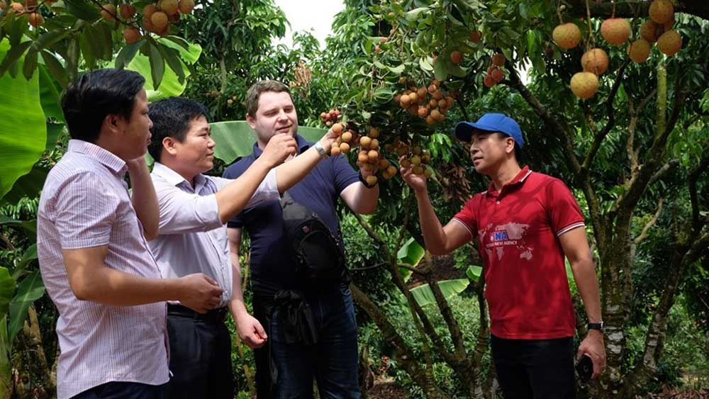 """Lychee kingdom"" looks to conquer demanding markets"