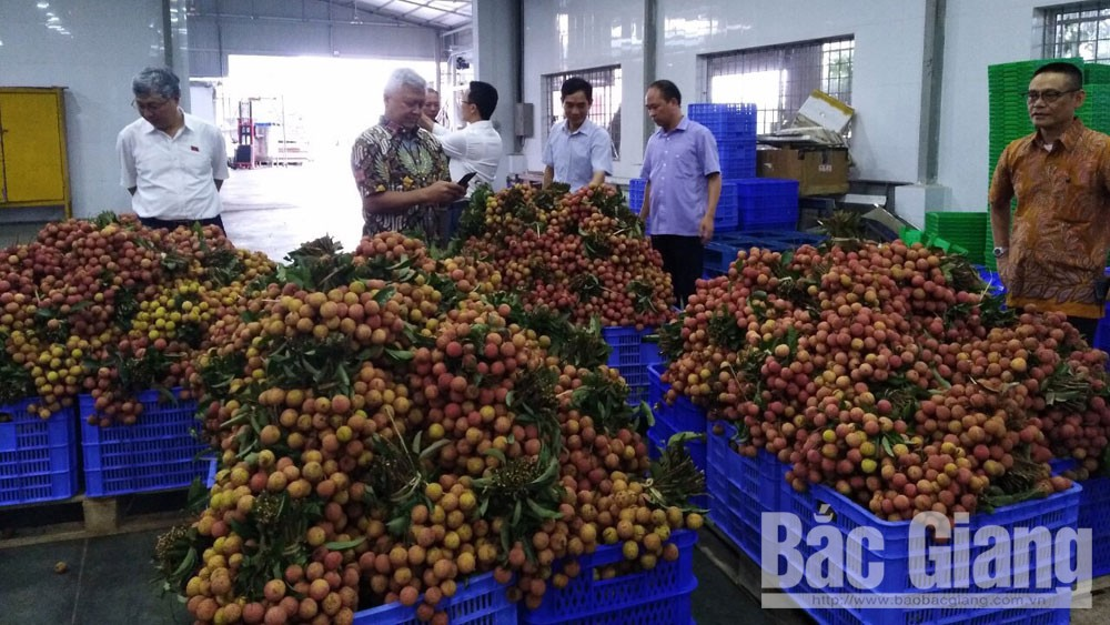 Bac Giang exports first batch of lychee to Japan