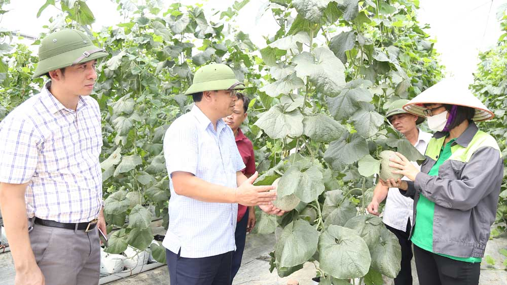 Yen Dung Safe Vegetable Cooperative improves value of agricultural products