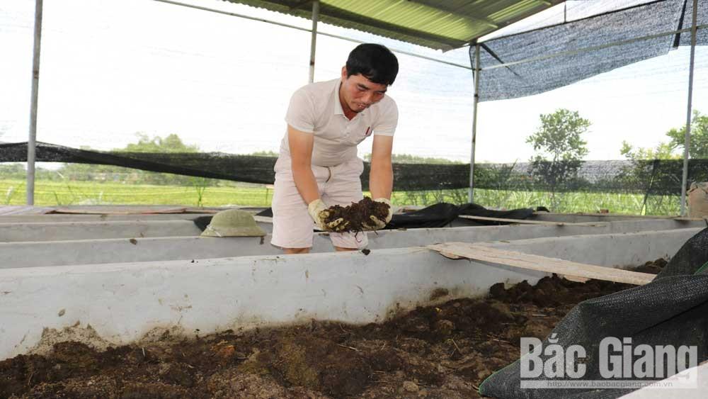 Nuôi trùn quế: Tăng thu nhập, bảo vệ môi trường