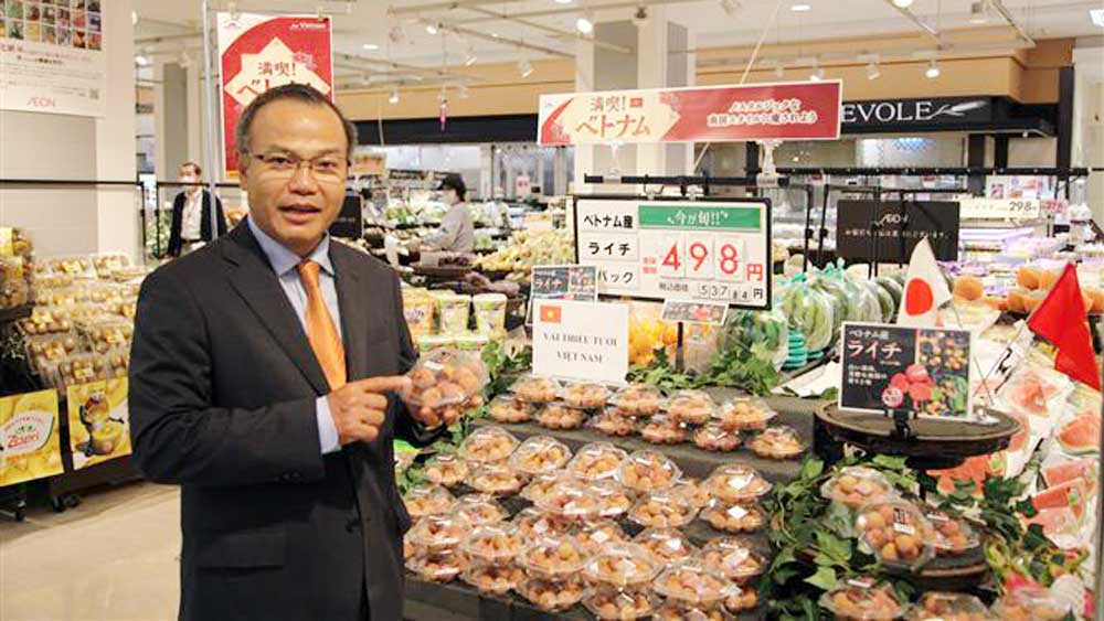 Luc Ngan lychee, high price, Japan market, Bac Giang province, Vietnamese fresh lychee, supermarket chains,   high quality, delicious taste