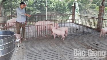 Gần 2 tỷ đồng hỗ trợ mô hình chuồng sàn chăn nuôi lợn tiết kiệm nước