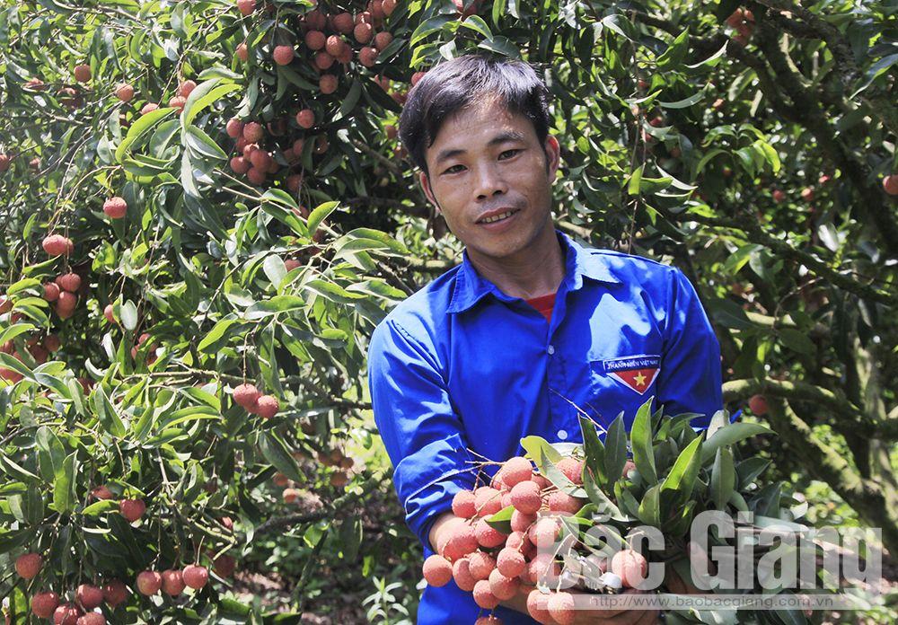 Bắc Giang, vải thiều xuất khẩu, Thanh niên Hộ Đáp