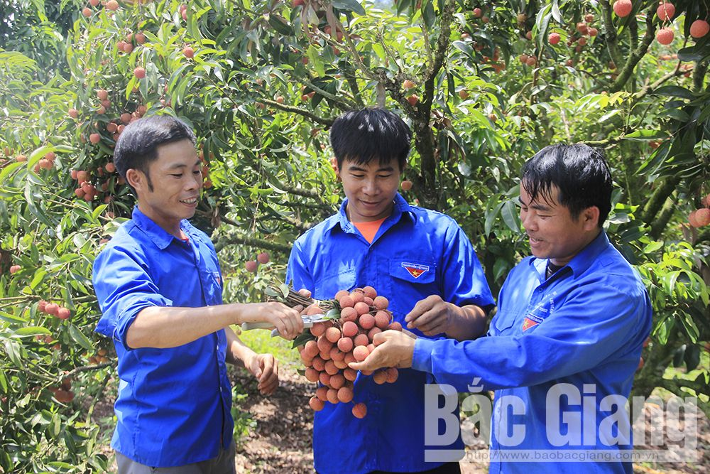 Mùa trái ngọt của thanh niên vùng hồ Cấm Sơn