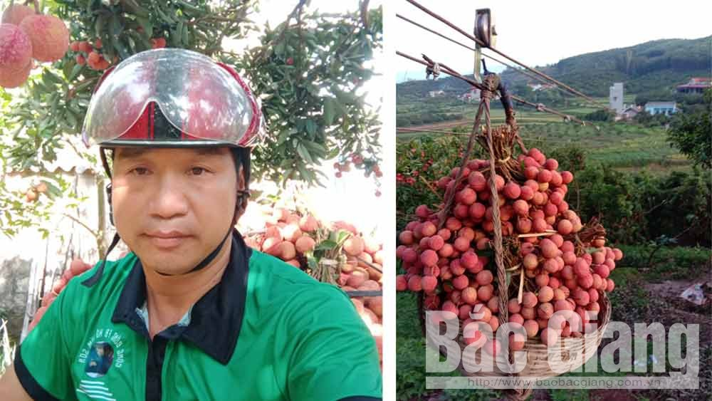 Luc Ngan lychee,  cable and trolley, Bac Giang province, creative method, yearly productivity, high mountain, farming material, smooth transport