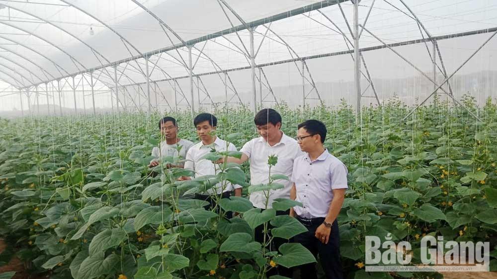 Sản xuất nông nghiệp ở Yên Dũng: Nhân rộng các mô hình ứng dụng công nghệ cao