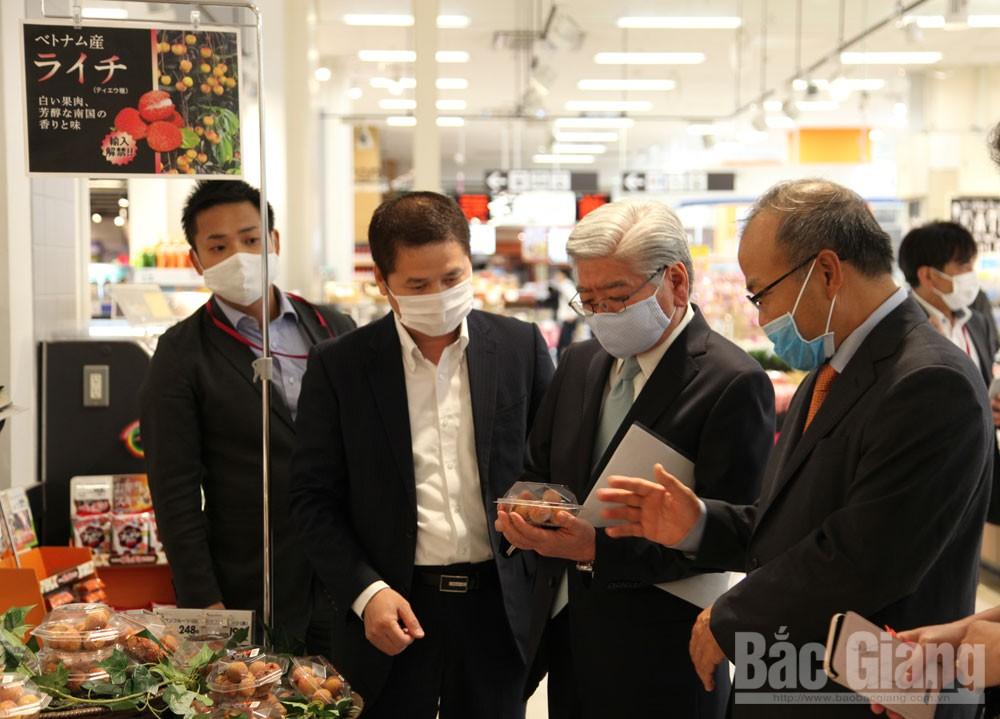Vải thiều Lục Ngạn, thị trường Nhật Bản, Lục Ngạn, Vải thiều bắc giang, Vải thiều, Xuất khẩu vải thiều Lục Ngạn sang Nhật Bản
