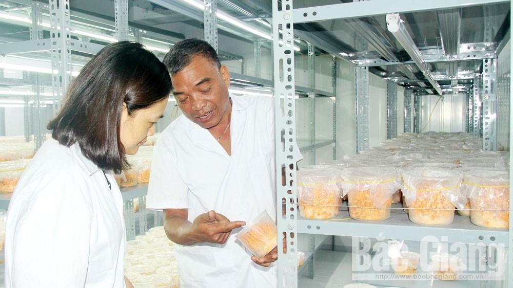 Hợp tác xã Đồng Tâm 3, xã Thường Thắng tích cực áp dụng tiến bộ khoa học kỹ thuật vào sản xuất nông nghiệp.