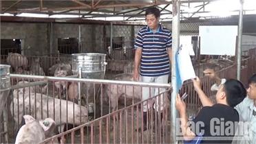 Tiện ích khi nuôi lợn theo mô hình chuồng sàn