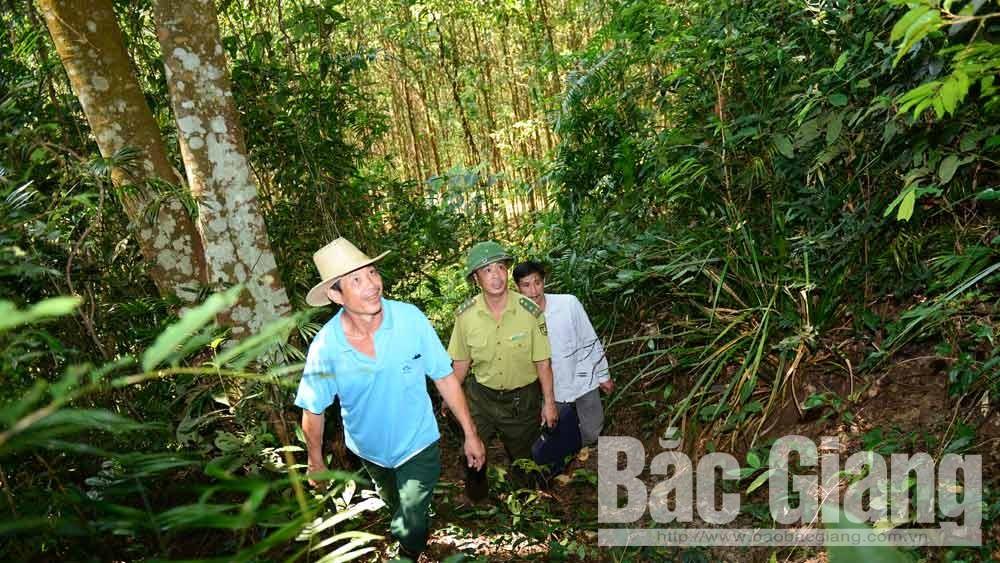 Bắc Giang: Giảm gần 60% số vụ vi phạm Luật Lâm nghiệp