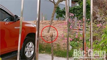 Bắc Giang: Gia tăng các vụ mất trộm hoa, cây cảnh