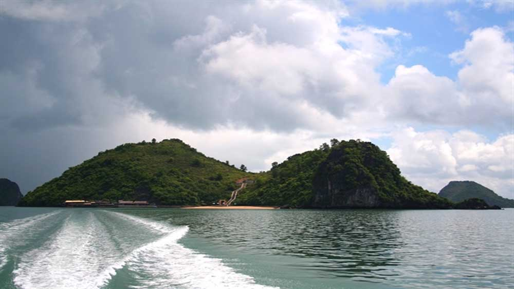 Wild nature, Ba Mun Island, diverse species, animals and plants,  wild travel, Cao Lo Island, Animal Island, rich biosphere