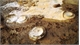 200-million-year-old mollusc fossils found in Gia Lai province